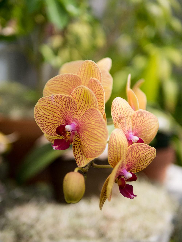 Orchid Range: Duke Farm, NJ