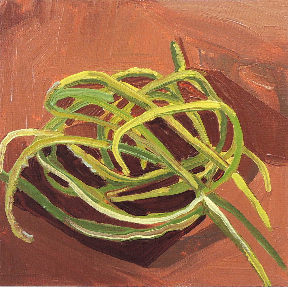 Rat Tail Cactus #1