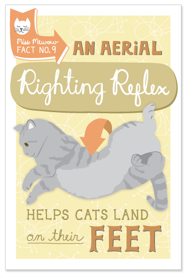 An aerial righting reflex helps cats land on their feet.