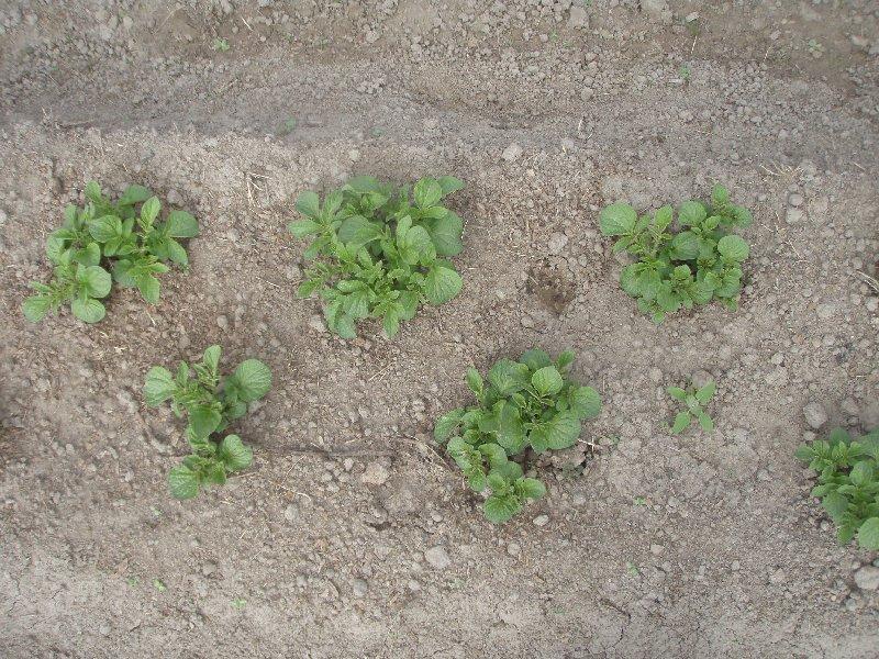 Garden Grande row