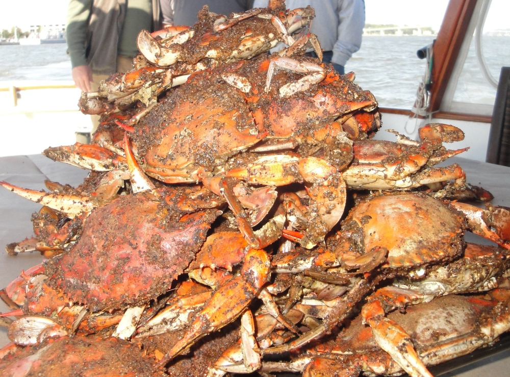 Steamed Crabs and more!
