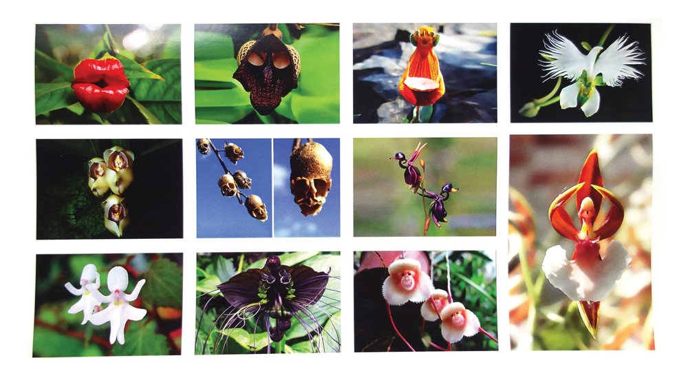 "Rainforest Art Foundation's traveling photo exhibit of strange-looking flowers becomes interactive in Shreveport, Louisiana, leading viewers to question whether plants communicate and what they may be saying at the wine and cheese opening reception of ""Amazing Flowers: Do Plants Talk?"" Friday, October 21, 5-7 PM.     ""In this interactive exhibit, we see the art of nature itself, we wonder about 'Mother Nature' as the artist, and viewers are welcomed to interpret what 'she' may be trying to convey through her work,"" said Director Stephanie Lusk.    Free with RSVPmymuseum@gmail.com and suggested $10 donation to benefit the Foundation."