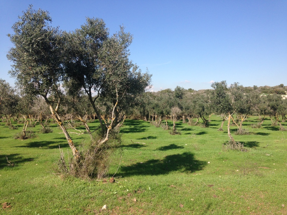 The green scenery around Beit Nir.