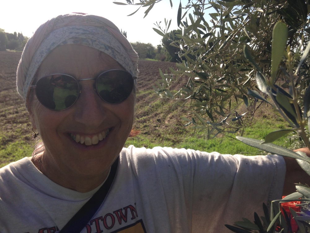 Ruth, and her husband Jan, used to be in charge of the olives in Gezer years ago. They return every year from Norway to lend a hand. She's amazing.