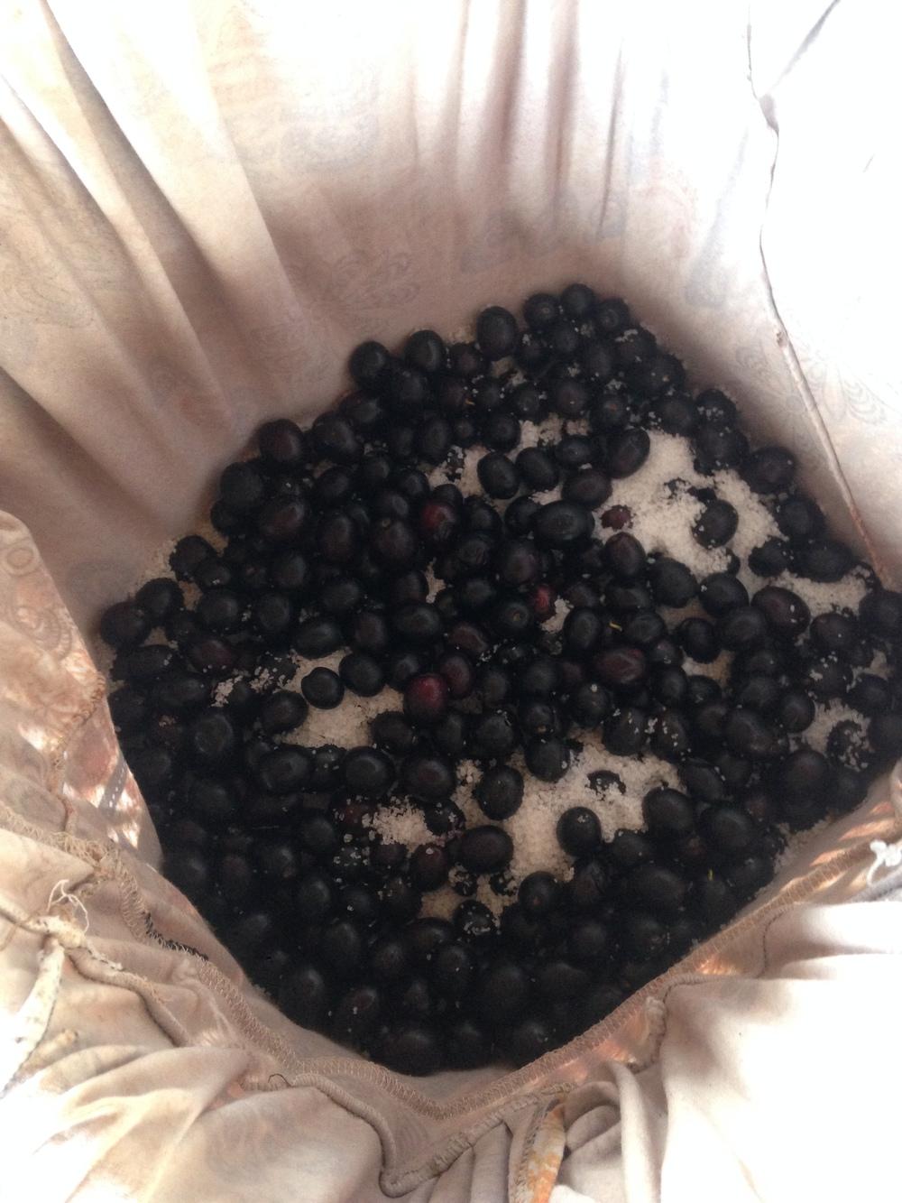 Dry salt-curing olives.