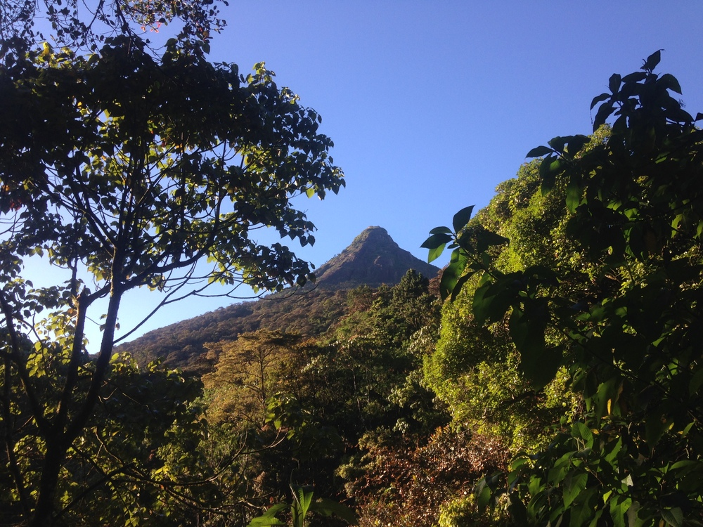 Looking up at Adam's Peak.
