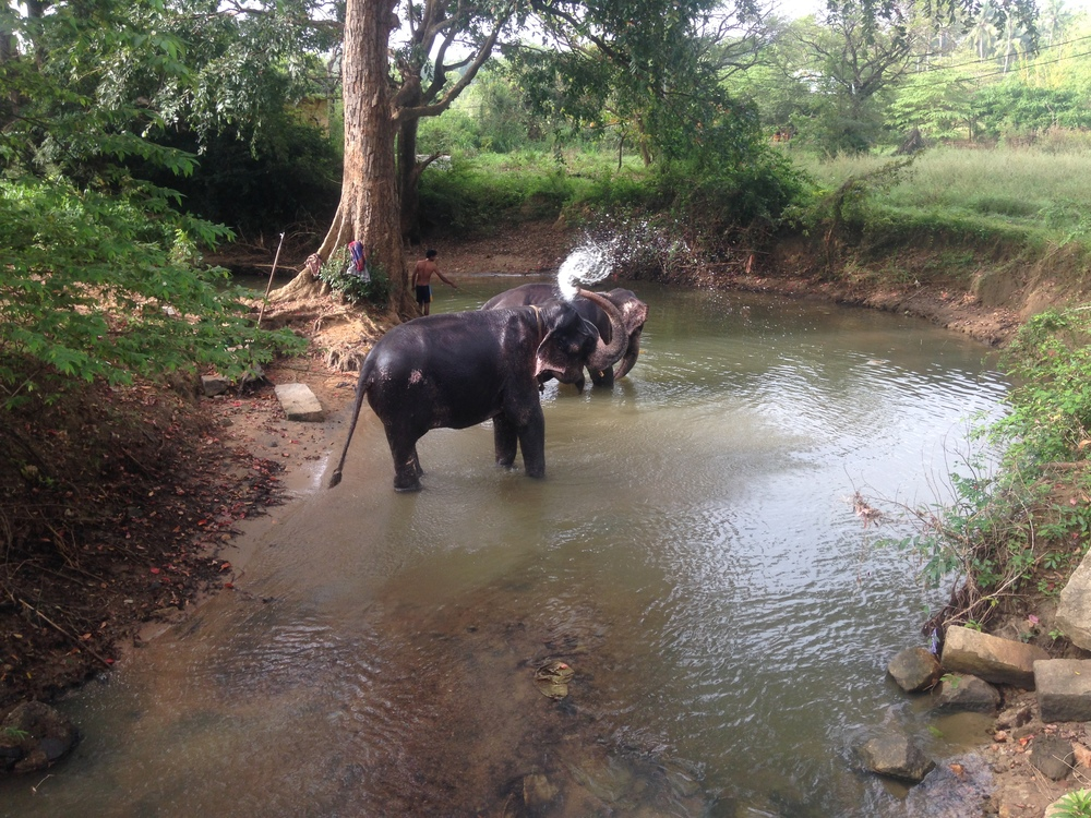 Elephants bathing in a stream.