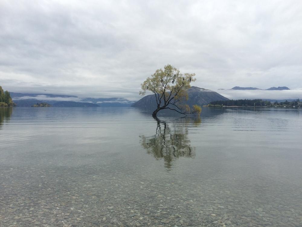 Lone tree at Lake Wanaka