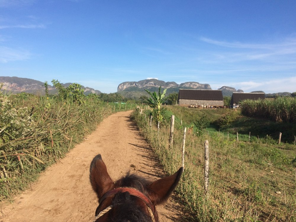 Horseback in Viñales