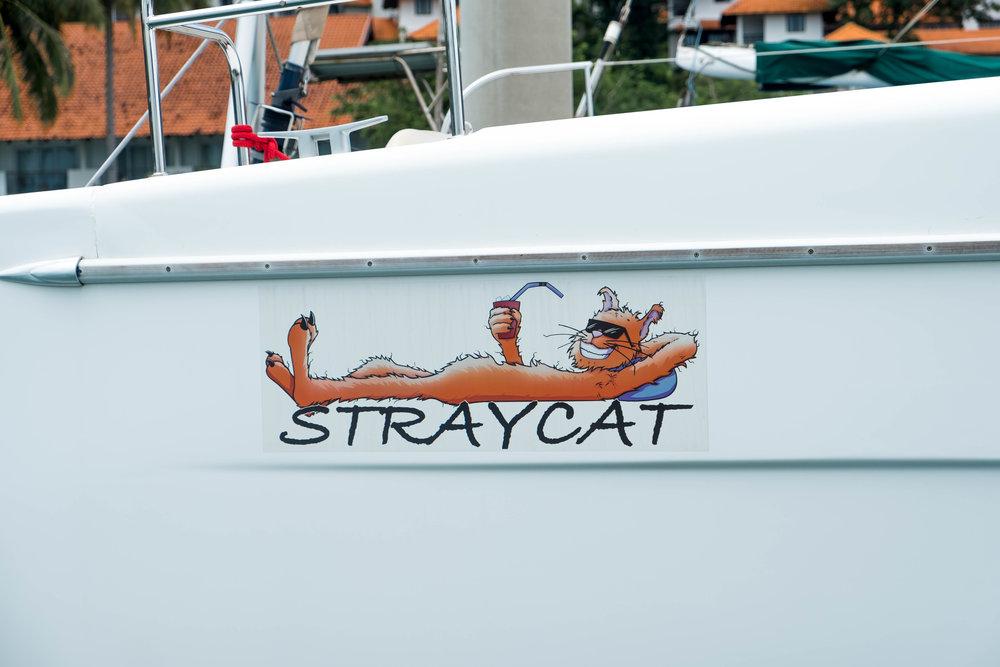 Life is good on Straycat
