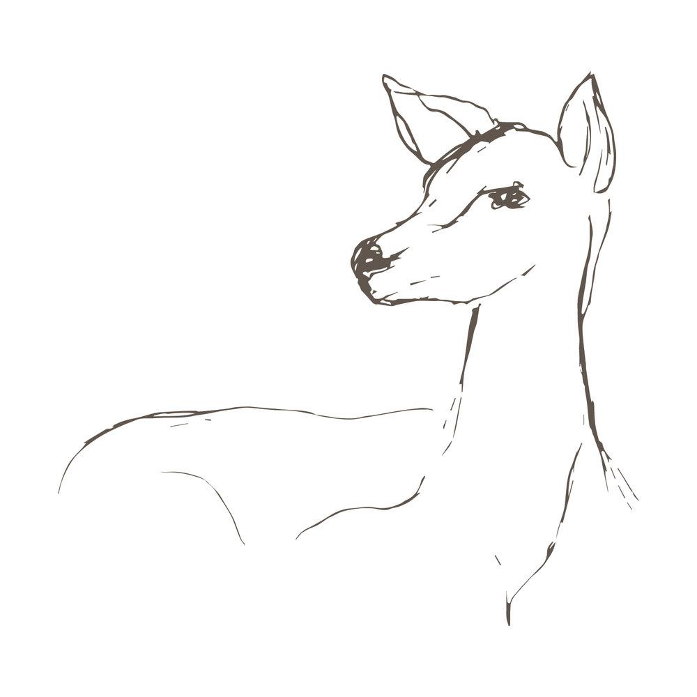 MB6 Deer.jpg