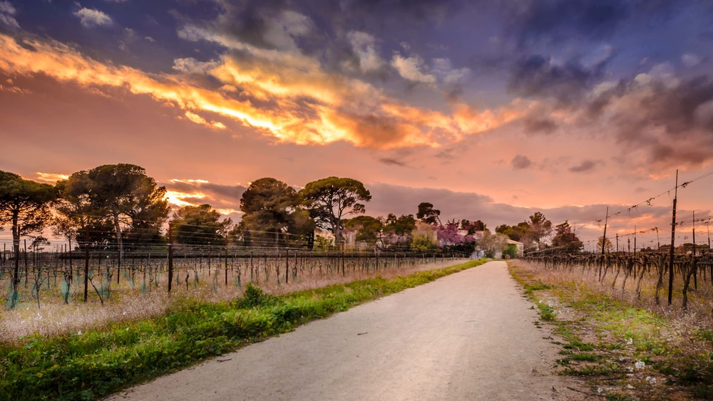 Passage au cœur des vignes, Agriparc des Grisettes, Montpellier