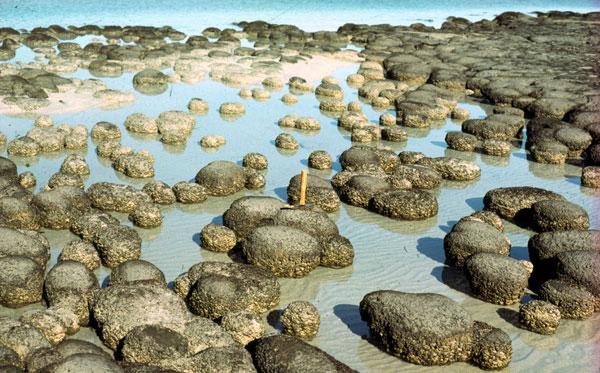 Les stromatolithes ont générés de l'oxygène durant 3 milliards d'années environ.