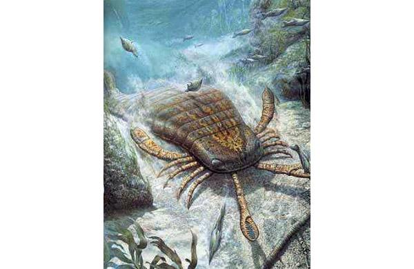 L'eurypteride un grand arthropode prédateur atteignant jusqu'à 2 mètres de long