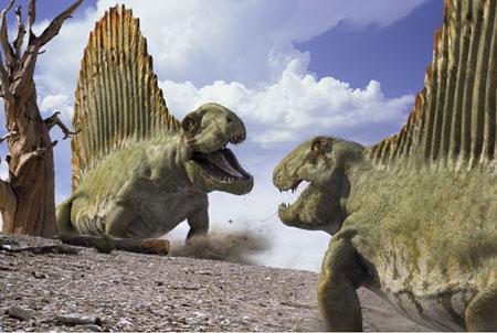 Dimétrodons,un thétapside apellé aussi reptile mammalien
