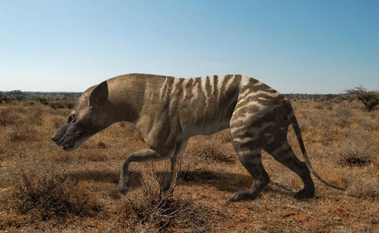 Le Hyaenodon, grand prédateur