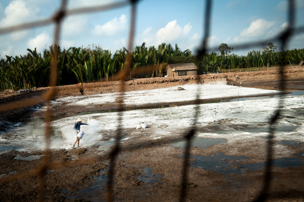 April 27, 2016.  Up until 5 years ago there wasn't a single shrimp farm on the island of Cu Lao Dat but due to increasing salinity levels many farmers have converted their rice plantations to shrimp farms.  Here, a man spreads lime on a shrimp pond to protect against disease and balance pH before starting his next shrimp harvest.  Nep, 69, explained that the water on his shrimp farm exhibits an oily like substance on the surface when salinity levels become too high.  Normally they can harvest 70 shrimp per kilogram and sell for $6 but the high salinity this year means that shrimps didn't grow as big and he needed to haul in 120 shrimp per kilogram during his recent harvest.  This brought in a reduced profit of only $3.5 per kilogram.  A salinity of 8-15% is the best environment for harvesting shrimp but his river water is currently at 25% salinity and is inoperable until the rains come.