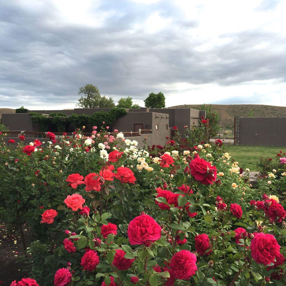 Cibolo Roses.jpg