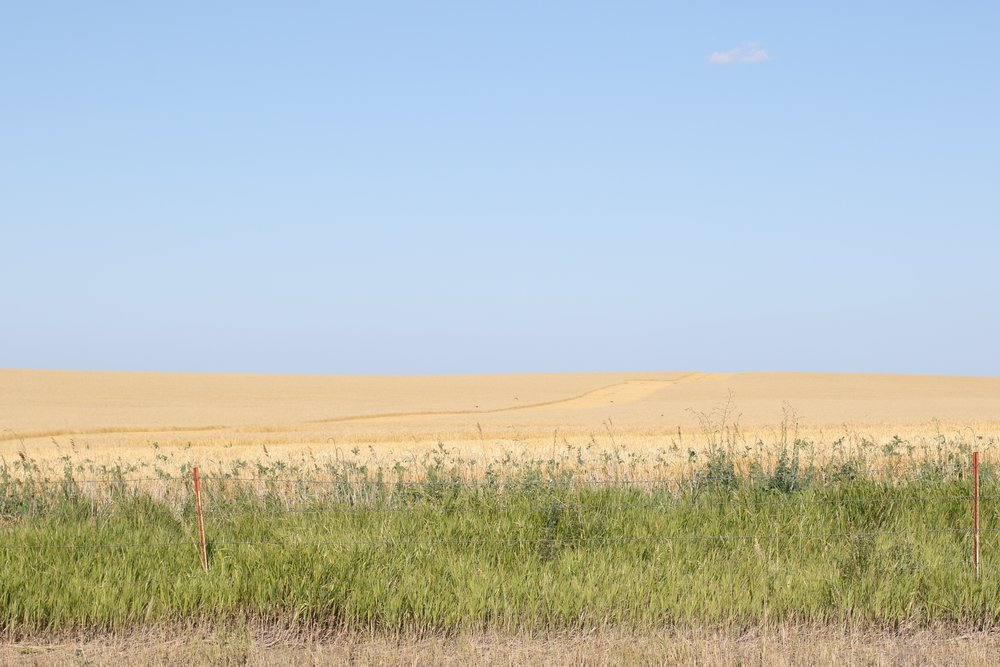 South Dakota 8.jpg