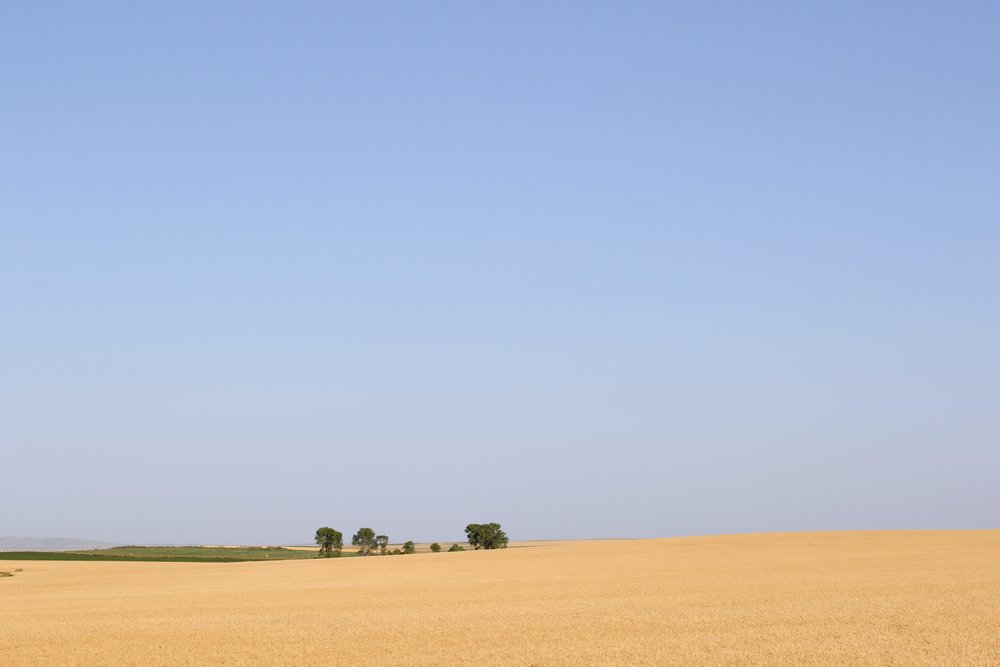 Wheat Fields South Dakota.jpg