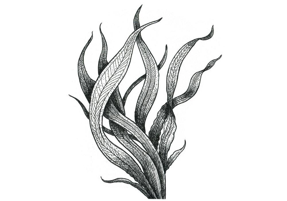 seaweed2_a.jpg
