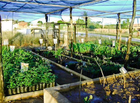 Supressão Vegetal com Resgate de Fauna e Flora - Bahia