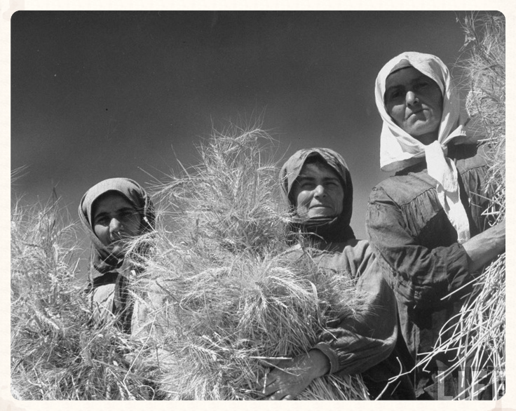 Ukrainian women at harvest time