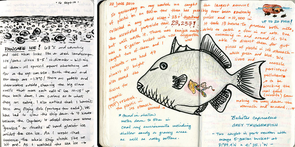 PancakeIce-Triggerfish_SMoret_2x.jpg