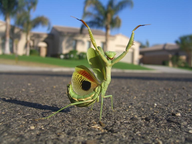 It is another day to LIVE! p.s. ….but if your 'e a male preying mantis…consider celebacy!