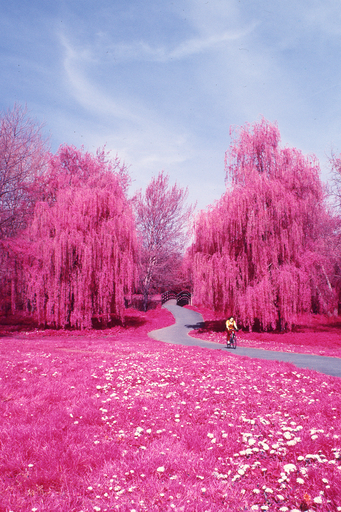 Why not PINK!??!!-www.ladykier.com….thanks dearscience: for sharing Colour Infrared - Canterbury, Spring http://www.mixcloud.com/ladykier/ https://www.facebook.com/pages/miss-Lady-Kier/296808489716?fref=ts