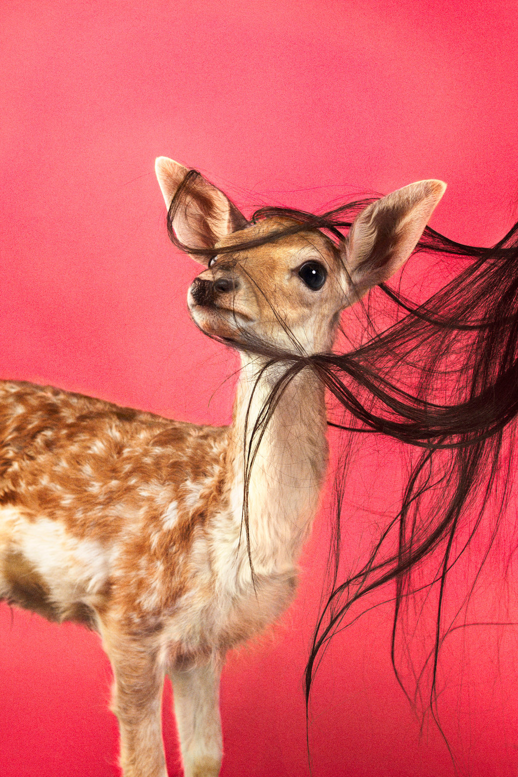 oh dear…don't miss Animals exhibition currently taking place at Team Gallery, NY. The show runs from May 2nd - June 2nd, 2012.This image by Ryan McGinley.- Lady Miss kier