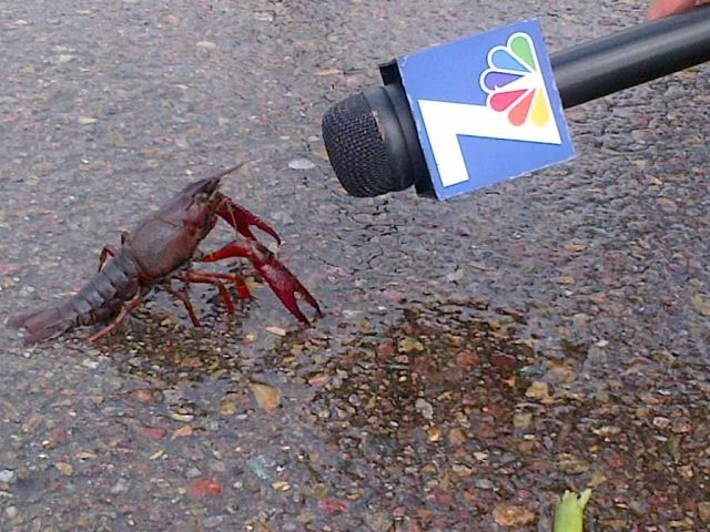 "and crawdaddy said ""of course the food chain is effed ….go interview BP about it because you guys keep censoring my interviews! "" -crawdad"