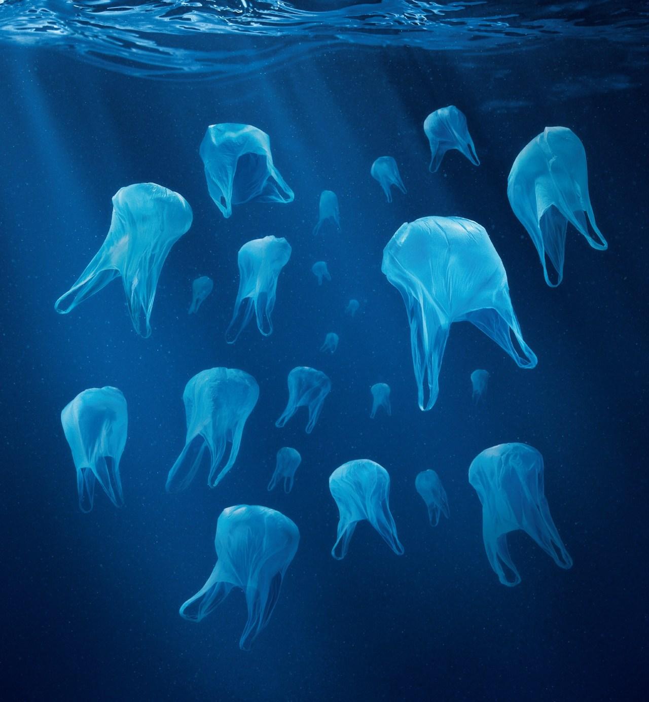 """Another reason i stopped eating seafood! I dont like plastic or fluorescent sushi -Lady Miss Kier     adqtvn :       Six millions de tonnes de déchets plastiques sont rejetés dans les océans par an. Avec les courants marins, ils se regroupent en plaques dont celle du Pacifique dépasse 5 fois la surface de la France. Épaisse de 30m, elle renferme 3,5 millions de tonnes de plastiques.    """"C'est une tragédie planétaire dont personne ne veut porter la responsabilité"""".    (Source:  futura-sciences.com )"""