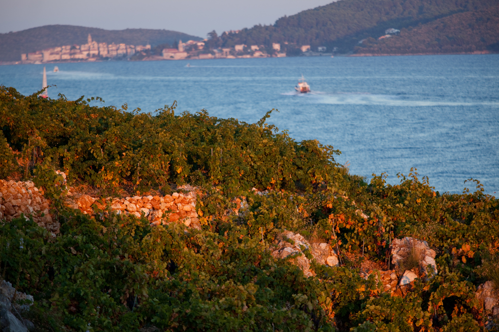 The vineyard in Viganj with a view of the city of Korcula