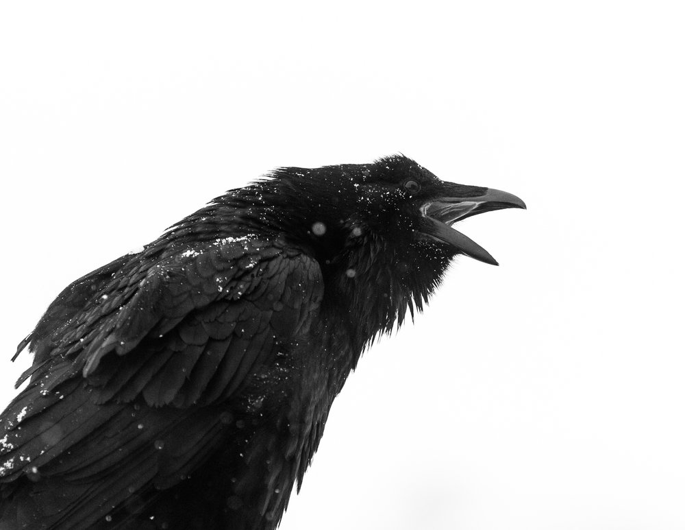 That's-so-raven.jpg