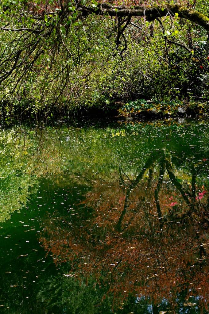 Butchart_Gardens_2011-05-04_02-34-42__SAM4949©MaggieLynch2011.jpg
