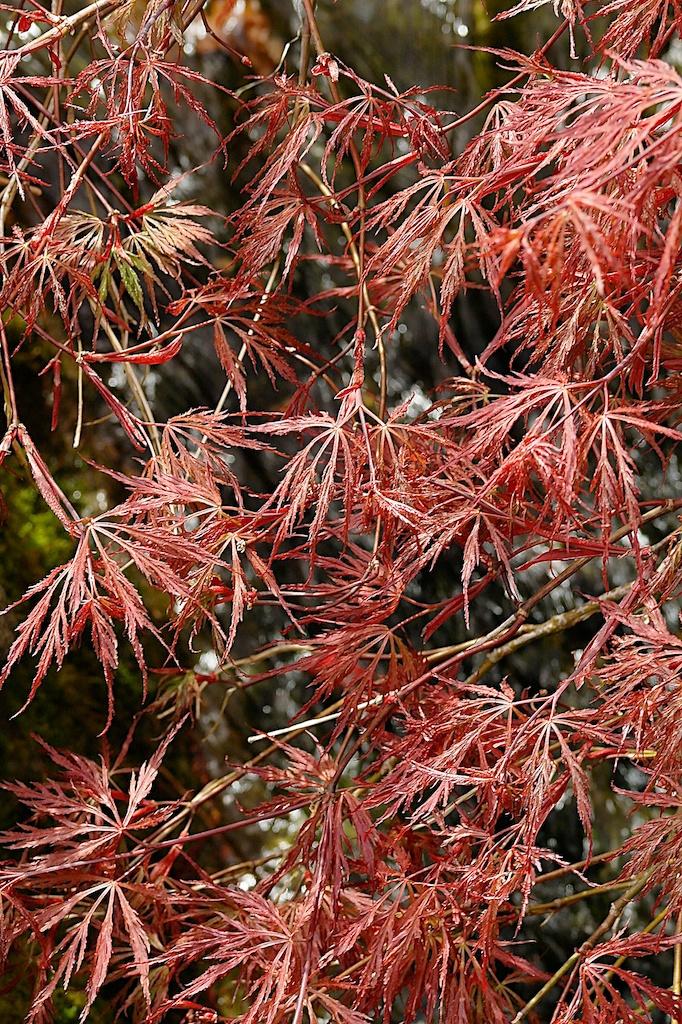 Butchart_Gardens_2011-05-04_03-25-31__SAM4981©MaggieLynch2011.jpg