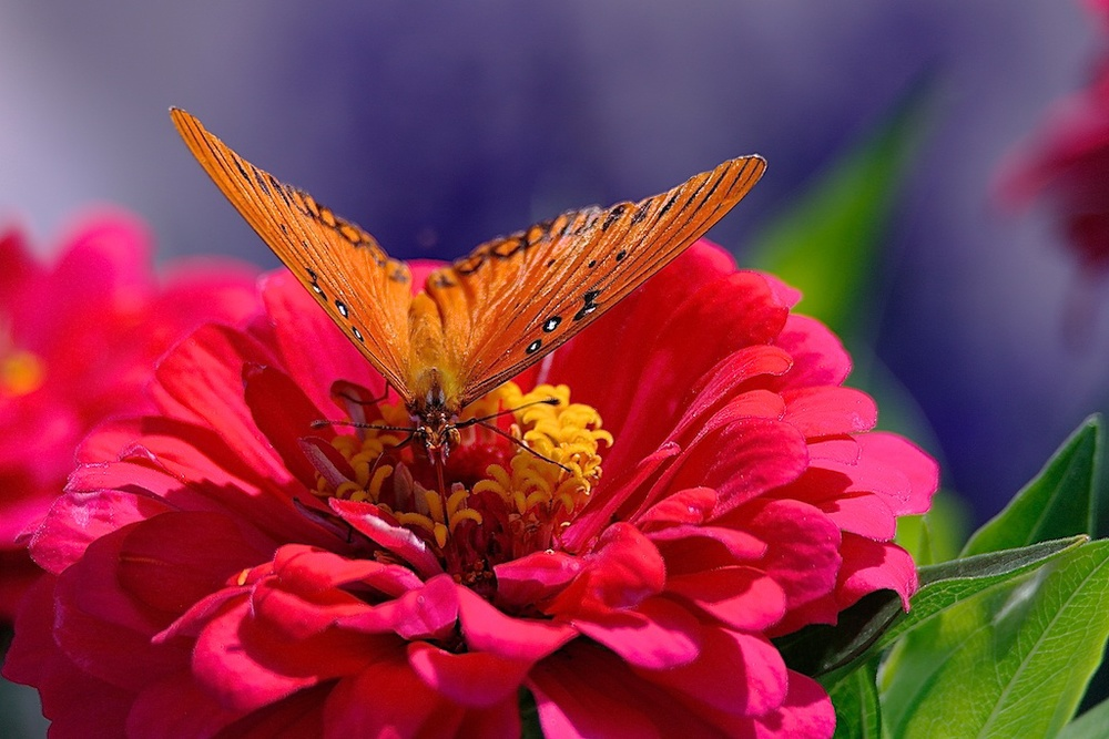 Butterfly_2011-09-16_12-29-40_34©MaggieLynch2011.jpg
