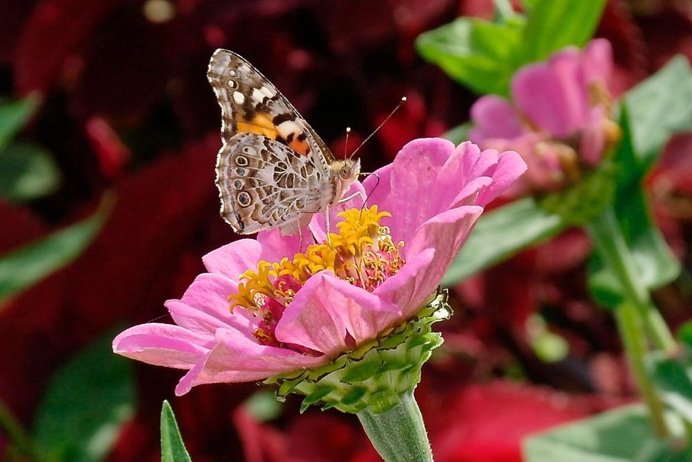 Eureka _2012-10-21_12-48-33_203©MaggieLynch2012.jpg