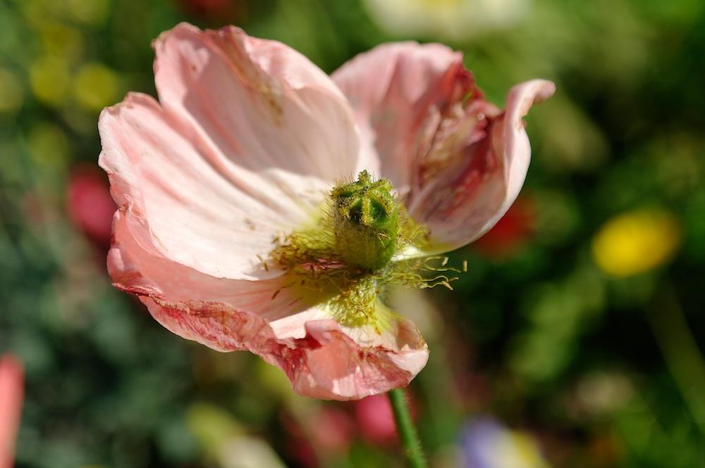 Flower_2013-04-19_16-24-32_179©MaggieLynch2013.jpg