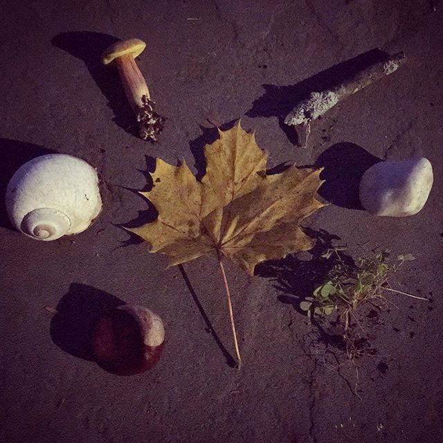 Found October offerings. Peace ✨🌌#landmadehandmade #forage #wild #art #land #love #naturespelljuliadenos Making Art From #dusk and #seashells #polypore