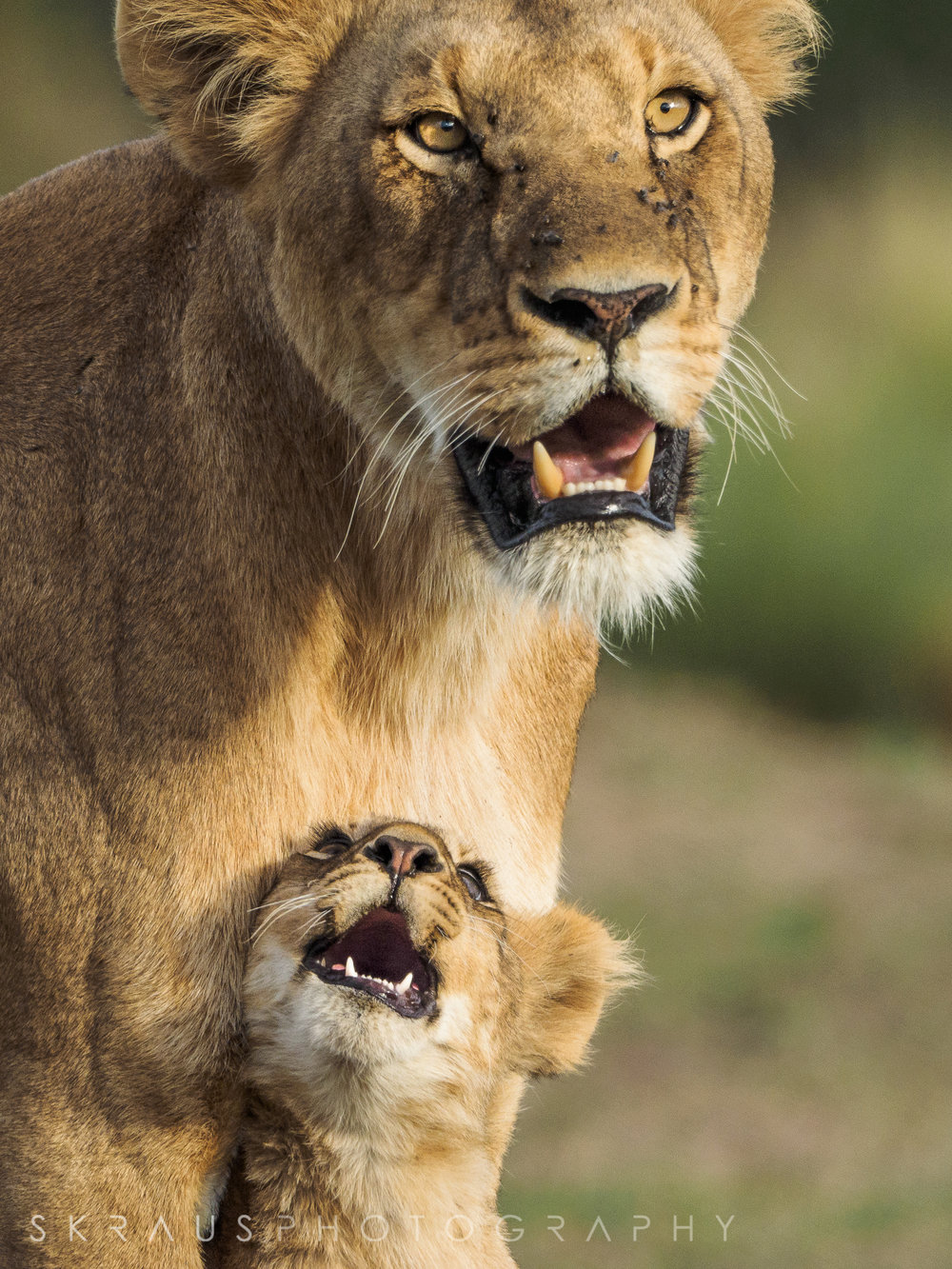 Lioness with Cub.jpg