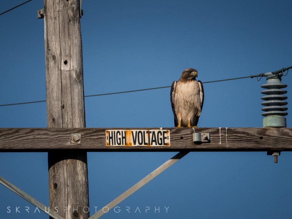 High Voltage.jpg