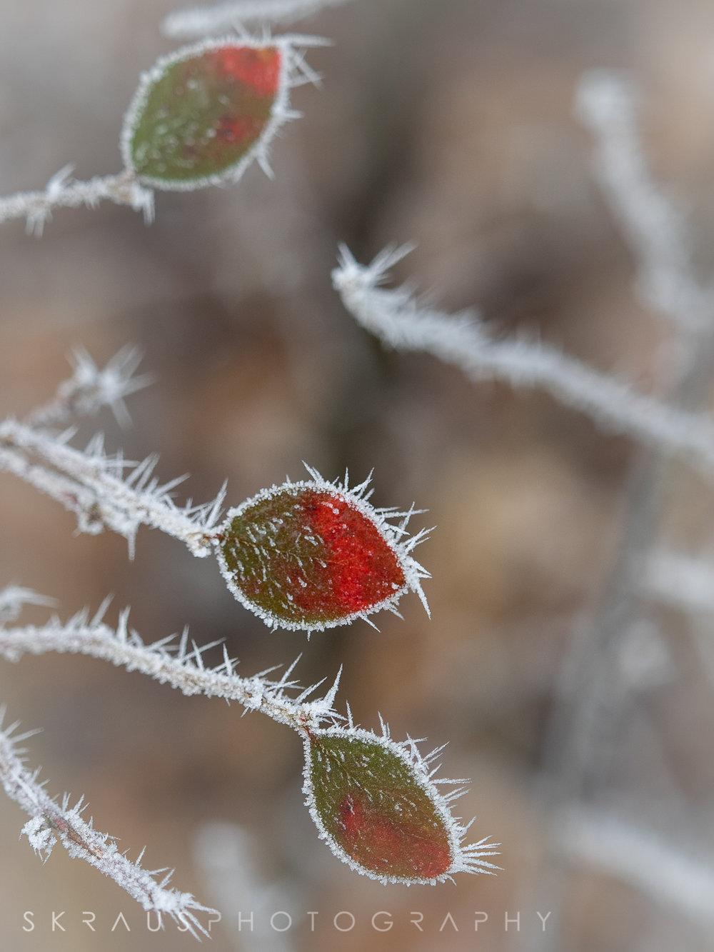 Frozen Fog-9.jpg