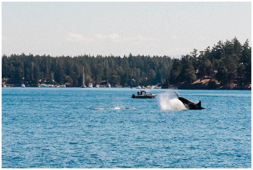 San Juan Island, Whale Watching Charter Wedding, Friday Harbor,