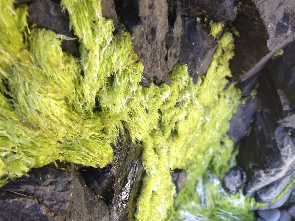 Some incredibly soft green moss that was covering the rocks.