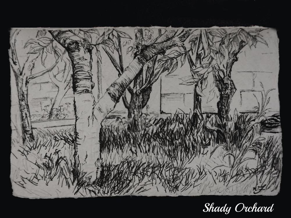 Shady Orchard.jpg