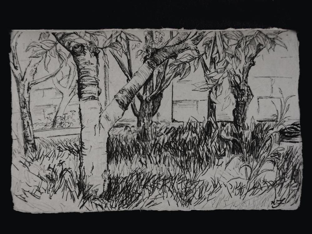 Shady Orchard