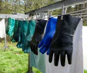 the gloves got their moment in the sun before being stuffed into a pillow case to protect them from the sugarhouse mice until next February;