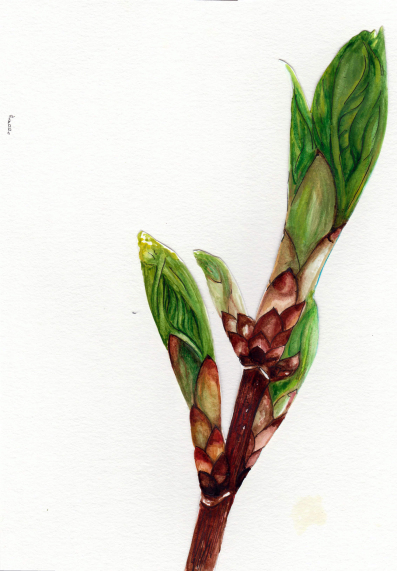 Flowers emerge from the tips. Watercolor by Ana Lucia Fernandez.